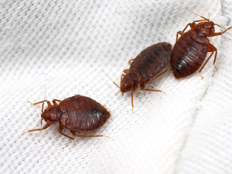 обработка от паразитов
