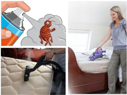 Современные методы борьбы с клопами в квартире